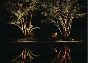 Uplighting trees strategies dunwoody outdoor lighting uplighting trees 1 aloadofball Image collections