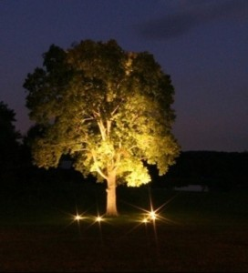 Uplighting Trees Strategies And Techniques